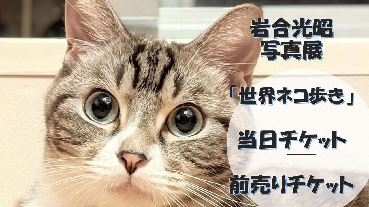 岩合光昭写真展「世界ネコ歩き」当日チケット販売はあるのか?前売りチケットの購入方法は?