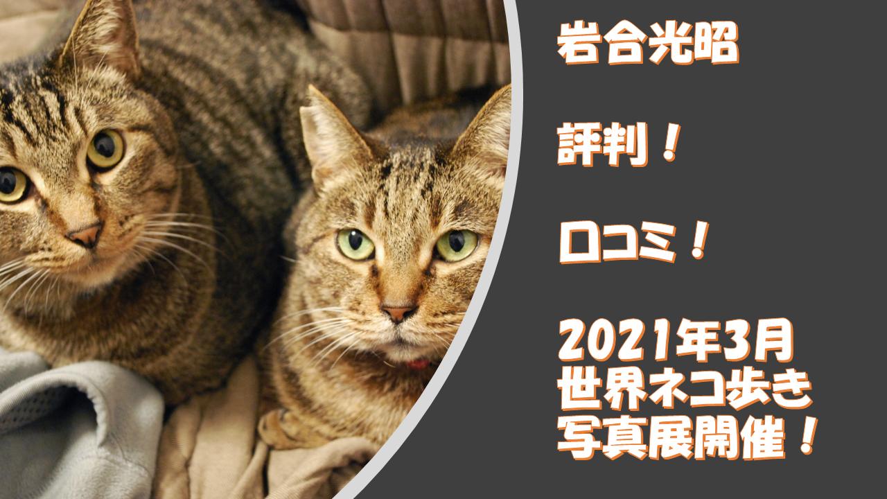 動物写真家【岩合光昭】評判、口コミ!2021年3月17日から「世界ネコ歩き」写真展を開催!